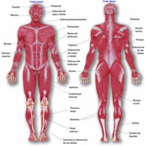 Consejos para hacer ejercicio con hipotiroidismo